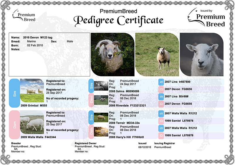 Pedigree Certificate Example